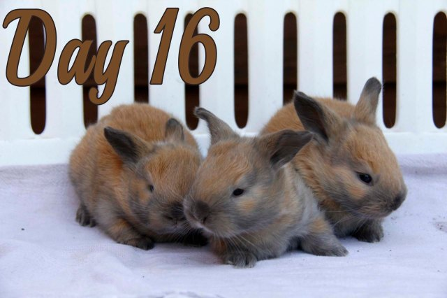 rabbit baby, baby bunnies