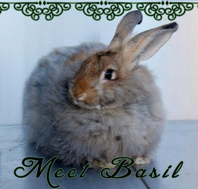 meet basil