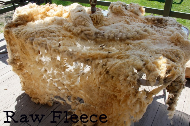 raw fleece.jpg